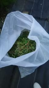 子供にも安心な食品成分の除草剤♪の画像(1枚目)