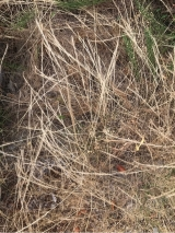 子供やペットがいても安心!お酢で作った除草剤の画像(6枚目)