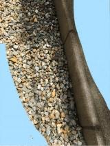 「お酢で作った除草剤 2L」の画像(4枚目)