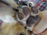 犬・猫用の肉球のためのプラチナクリーム『ウィッシュ グルーミングプロ』。。。②の画像(3枚目)