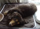犬・猫用の肉球のためのプラチナクリーム『ウィッシュ グルーミングプロ』。。。③の画像(5枚目)