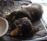 犬・猫用の肉球のためのプラチナクリーム『ウィッシュ グルーミングプロ』。。。③の画像(4枚目)