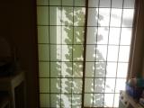 へちまで緑化計画2(^^♪の画像(3枚目)