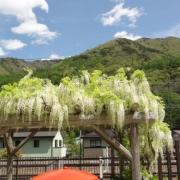 「青い空と白い藤」真夏にぴったり!人気『ヘアソープ&ヘアマスク』フォトコンテストを開催!の投稿画像
