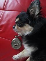 「ロトのしるし☆懐中時計」の画像(1枚目)