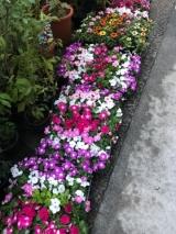 「花いっぱい」の画像(2枚目)