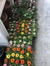 「花いっぱい」の画像(3枚目)
