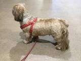 「愛犬のためのペットシーツ」の画像(3枚目)
