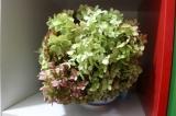 ドライ紫陽花でリースの画像(6枚目)