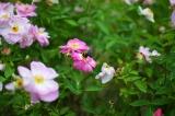 アイデス「カンガルー」で秋のレジャー*東沢バラ公園に行ってきましたの画像(18枚目)