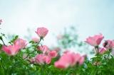 アイデス「カンガルー」で秋のレジャー*東沢バラ公園に行ってきましたの画像(13枚目)