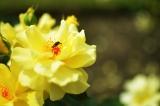 アイデス「カンガルー」で秋のレジャー*東沢バラ公園に行ってきましたの画像(16枚目)