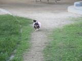 大浜北公園@堺に行ってきたの画像(1枚目)