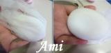 【 クマウォッシュ洗顔石鹸で「クマ」対策中! ③ 】の画像(1枚目)