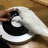 「✴︎ ロボット掃除機 マッピィ モニター ✴︎」の画像(2枚目)