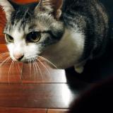 「愛猫の健康を考えたらメディファス」の画像(1枚目)