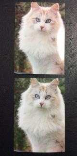 インク革命.COM   高品質互換インクで印刷を純正品と変わらない美しさで☆の画像(9枚目)