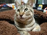 猫の健康維持を考えた栄養設計「メディファス 避妊・去勢ケアタイプ」をあげてみました♪の画像(11枚目)
