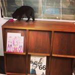 リビングにある本棚に。#ママケアが使いたい #monipla #ナリスアップコスメティックスファンサイト参加中のInstagram画像