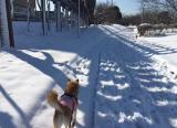 「雪!」の画像(3枚目)