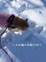 「雪!」の画像(4枚目)