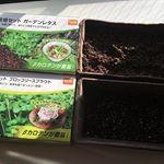 【DCMブランド 栽培セット】育ててます♫.私の栽培セットは「ガーデンレタス」&「ブロッコリースプラウト」。どちらも大好きだから、成長が楽しみ✨.栽培セットは土とプランターとタネがセッ…のInstagram画像