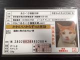 非売品の【あさくさ福猫太郎】開運 豆お守りの画像(1枚目)