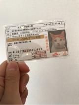 あさくさ 福猫太郎 開運 豆お守りの画像(3枚目)