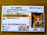 カワイイ!あさくさ福猫太郎で開運!の画像(3枚目)