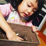 娘が雪の日に植えた#dcm栽培セット のレタス。早くおおきくならないかな〜と鉢をよくのぞいていた。室内で育ってくれて、感動。#2歳10ヶ月 #末っ子 #三姉妹 #モニプラファンブロ…のInstagram画像