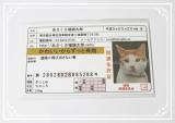 縁起のいい「あさくさ福猫太郎」開運グッズの画像(3枚目)