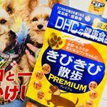 DHC『犬用 国産 きびきび散歩 プレミアム』のモニターをさせて頂きました🐶🐾 大人気のきびきび散歩に新成分をプラス✨通常価格¥1,150(税抜)プレミアムな働きで、ワンちゃんの関…のInstagram画像