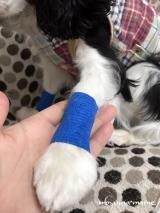 「「ペット用 粘着包帯 バンデージ」を使ってみました。」の画像(4枚目)