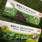 最近ガーデニング始めました♥️..最近ハマりのブロッコリースプラウトと.ガーデンレタスをやってみたよー✨..ちょっとずつ芽が出てあと少しで食べれる〜😍✌️...…のInstagram画像