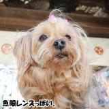 近江八幡/日牟礼八幡宮etc/2月中旬 の画像(24枚目)