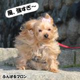 近江八幡/日牟礼八幡宮etc/2月中旬 の画像(3枚目)