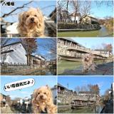 近江八幡/日牟礼八幡宮etc/2月中旬 の画像(11枚目)