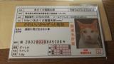 2回目♥あさくさ福猫太郎当選♥の画像(4枚目)