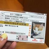 あさくさ福猫太郎 開運福猫豆お守りの画像(2枚目)