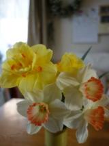 「歩くためのアプリ & 花を飾るもの」の画像(2枚目)
