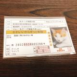 口コミ記事「かわいいからずっと有効♡あさくさ福猫太郎開運純金メッキ豆お守り」の画像