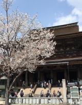 「吉野千本桜」の画像(5枚目)