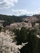 「吉野千本桜」の画像(3枚目)
