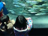サンシャイン水族館♡の画像(3枚目)