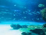 サンシャイン水族館♡の画像(1枚目)