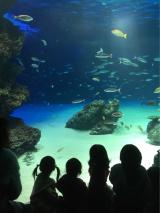 サンシャイン水族館♡の画像(4枚目)