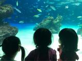 サンシャイン水族館♡の画像(2枚目)