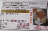 『あさくさ福猫太郎』非売品開運豆お守り  ~株式会社HOKUSINの画像(4枚目)