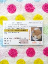 開運「あさくさ福猫太郎」の肉球:当選品の画像(2枚目)