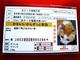 あさくさ福猫太郎ちゃんまたまた当選!の画像(3枚目)